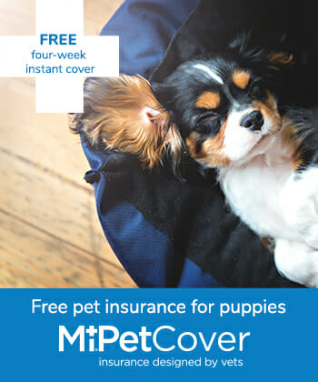 MiPet Cover puppies insurance advert