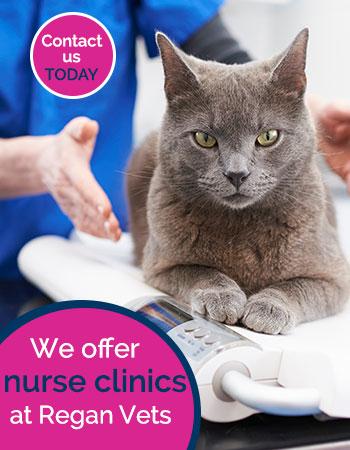 Nurse clinics available at Regan Veterinary Group